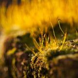 Luce della primavera Fotografia Stock Libera da Diritti