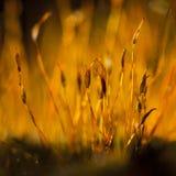 Luce della primavera Fotografia Stock