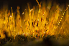 Luce della primavera Fotografie Stock Libere da Diritti