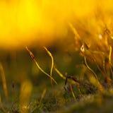Luce della primavera Fotografie Stock