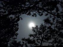 Luce di luna Fotografia Stock