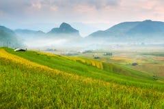 Luce di mattina da riso sul terrazzo al paesaggio del Vietnam fotografie stock libere da diritti