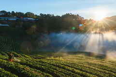 Luce di mattina, paesaggio, natura, punto di vista di mattina di Doi Ang Khang, Chiangmai Fotografia Stock Libera da Diritti