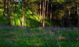 Luce di mattina sopra i wildflowers Fotografia Stock