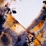 Luce di Moss Agate Fotografia Stock