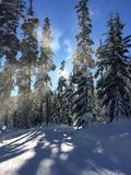 Luce di Snowy Fotografia Stock Libera da Diritti