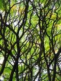 Luce di Sun attraverso i rami degli alberi Fotografie Stock Libere da Diritti