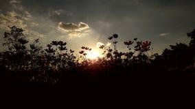 Luce di Sun e del fiore Immagine Stock