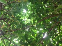 Luce di Sun sulla foglia Fotografia Stock Libera da Diritti