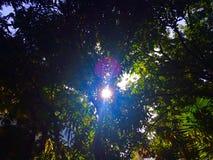 Luce di Sun tramite le foglie Fotografie Stock Libere da Diritti