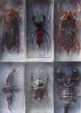 Luce di vetro di giorno della raccolta dell'insetto di biologia Immagine Stock