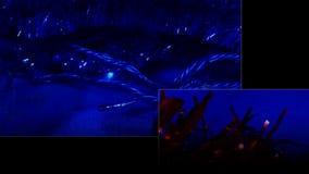Luce di Xtmas video d archivio