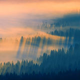 Luce dorata di mattina Fotografia Stock