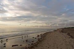 Luce dorata di mattina sulla spiaggia Immagine Stock