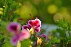 Luce e fiori Immagini Stock