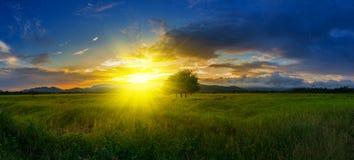 Luce e risaie di tramonto nella stagione delle pioggie di sera in Tailandia Fotografie Stock Libere da Diritti