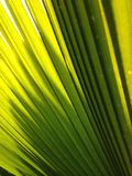 Luce e verde Fotografie Stock
