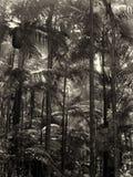 Luce filtrata attraverso le foglie di palma in sotto foresta pluviale tropicale Fotografia Stock Libera da Diritti
