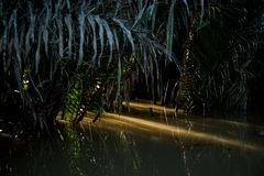 Luce fra le foglie di palma sul Mekong Fotografia Stock Libera da Diritti