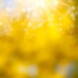 Luce gialla dell'estratto del bokeh Fotografia Stock Libera da Diritti