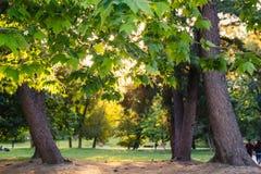 Luce luminosa del sole nel parco di estate Fotografie Stock Libere da Diritti