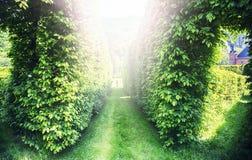 Luce misteriosa in parco fotografia stock