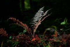 Felce magica nella foresta Immagini Stock Libere da Diritti