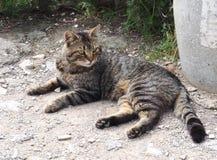 Luce naturale all'aperto di Cat Laying Down, Sunny Day Fuoco selettivo Fotografia Stock