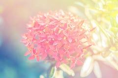 Luce naturale con i fiori Fotografie Stock