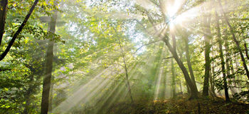 Luce nella foresta Immagine Stock
