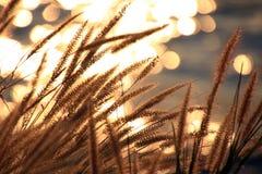 Luce scintillante dal fiume Fotografia Stock Libera da Diritti