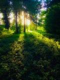 Luce solare attraverso gli alberi immagini stock libere da diritti
