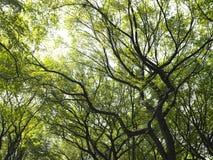 Luce solare attraverso gli alberi Fotografia Stock
