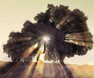 Luce solare attraverso gli alberi Immagine Stock Libera da Diritti