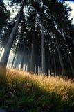 Luce solare attraverso gli alberi Immagini Stock