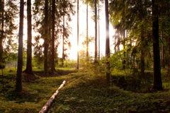 Luce solare attraverso gli alberi Fotografia Stock Libera da Diritti