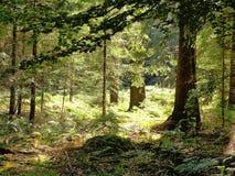Luce solare attraverso gli alberi Fotografie Stock Libere da Diritti