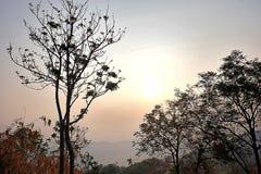 Luce solare attraverso gli alberi asciutti Fotografie Stock