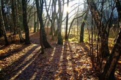 Luce solare attraverso gli alberi in autunno Fotografie Stock Libere da Diritti