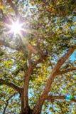 Luce solare attraverso gli alberi nel parco Fotografie Stock Libere da Diritti