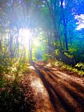 Luce solare attraverso gli alberi sulla strada non asfaltata immagini stock