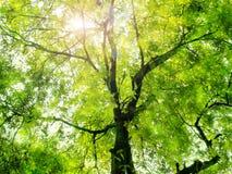 Luce solare attraverso gli alberi verdi Fotografia Stock Libera da Diritti