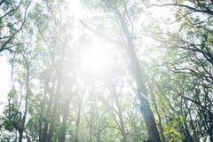 Luce solare attraverso i rami Fotografia Stock Libera da Diritti