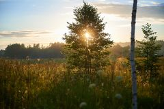 Luce solare attraverso i rami dell'albero al festival di estate fotografia stock