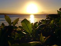 Luce solare attraverso il fogliame fotografia stock libera da diritti