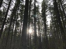 Luce solare attraverso il legno Immagine Stock