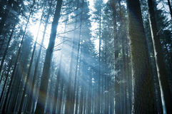 Luce solare attraverso la foresta Immagini Stock Libere da Diritti