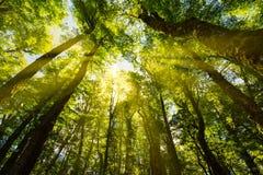 Luce solare attraverso la foresta Fotografia Stock