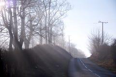 Luce solare bassa di inverno che scorre attraverso gli alberi immagine stock
