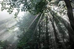 Luce solare che passa in tutto la foresta Poloniny - in Slovacchia Fotografia Stock